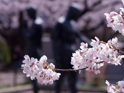サクラの花をきれいに撮る方法 PLフィルターの実力は?