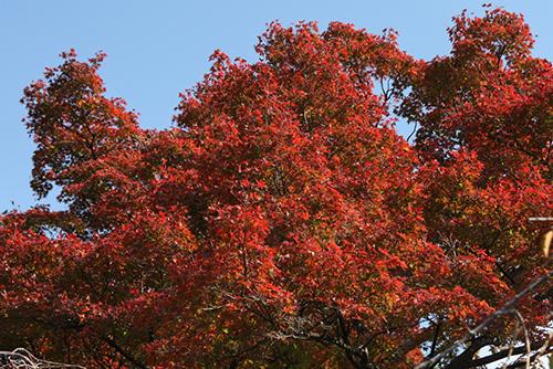 紅葉をきれいに撮る方法
