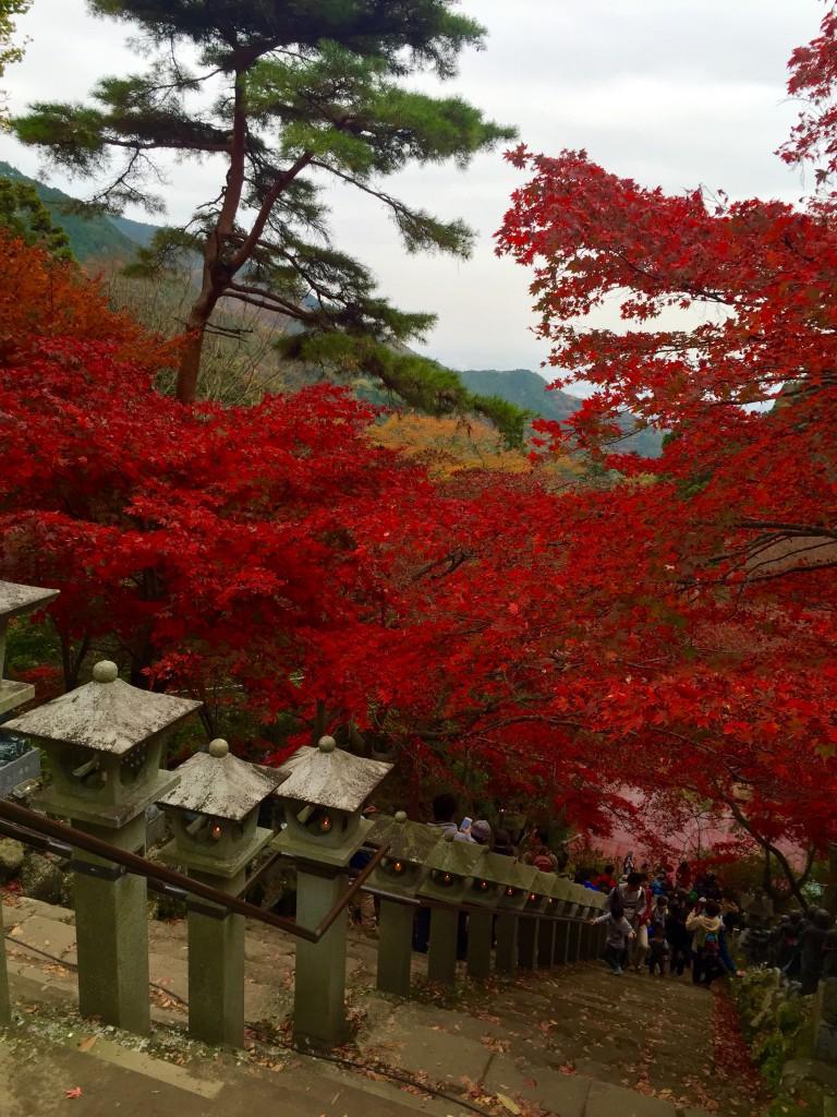神奈川県伊勢原 大山の紅葉