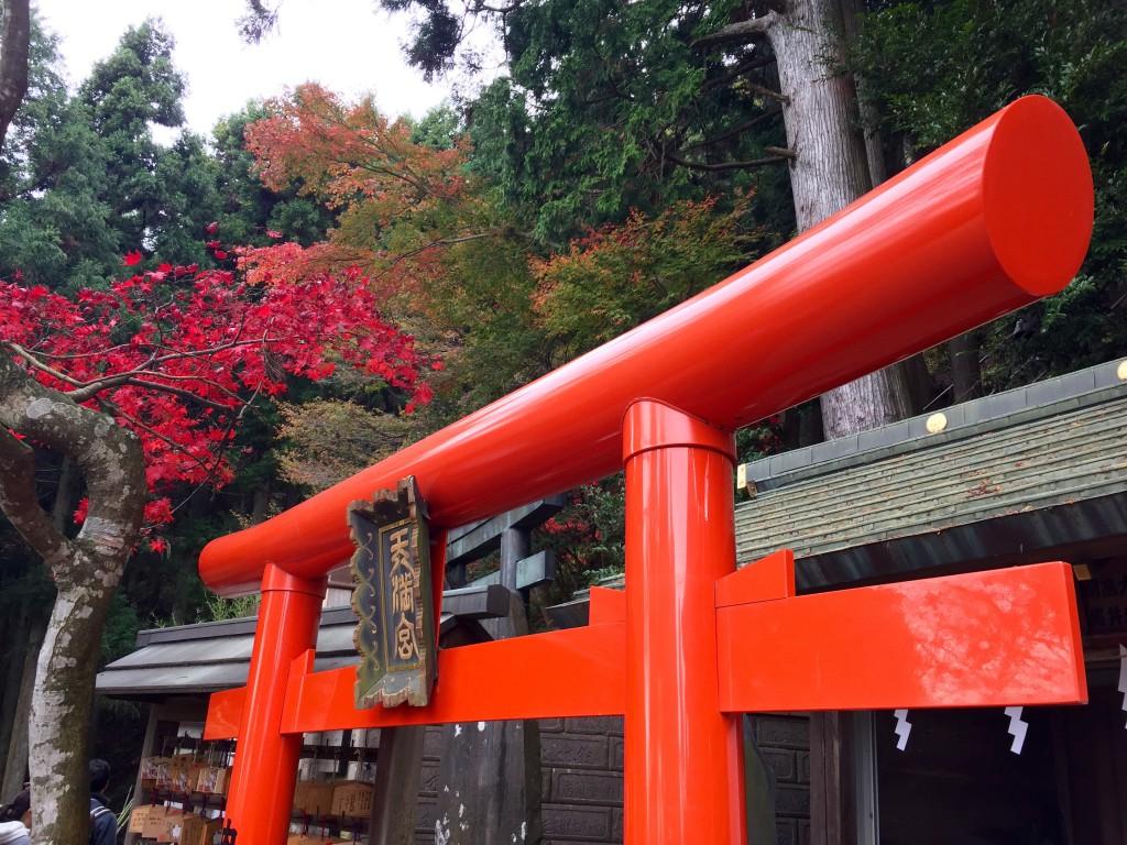 紅葉を撮影してきました 神奈川伊勢原 大山